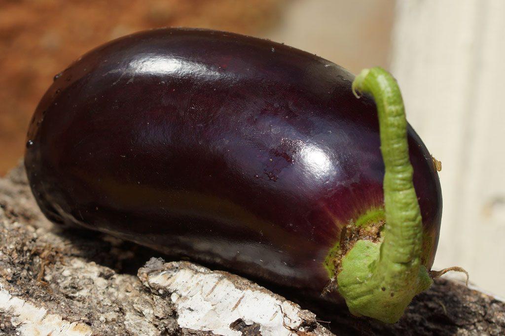 Melanzani Frucht